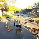 『世界最大の猫の楽園保護施設キャットハウス・オンザ・キングス』の画像