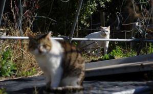 子猫の時から顔なじみの猫たち