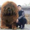 【画像】余りにもデカすぎる犬が発見される #イヌ #デカイーヌ