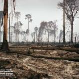 『新国立競技場が東南アジアの原生林を破壊している疑い』の画像