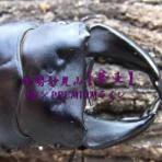 GOGEETA7のオオクワ飼育日記  ~神秘の赤目~