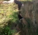 【画像】崖から落ちそうになっていたイヌを散歩中の男性が救出