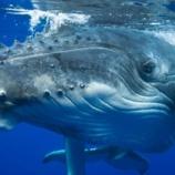 『クジラの歌』の画像