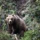 北海道「クマ危ないから撃つンゴ」謎の勢力「可哀想やろ!」