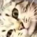 ネコは掃除機が苦手だ。音を聞いただけで逃げてしまう → うちの猫はこうなります…