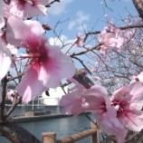 『神戸・花の名所~水辺の遊歩道うおざき』の画像