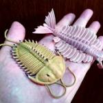 「大むかしの海」の生物、三葉虫やアノマロカリスがフィギュアになってガチャに登場