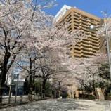 『桜満開』の画像