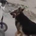 【イヌ】 おじいさんは「車いす」に乗っていた。お家までもう少しだワン♪ → 犬はいつもこうします…