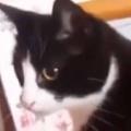 ネコが椅子の上でくつろいでいた。ベシっ! → 自分の「しっぽ」にこうなっちゃう…