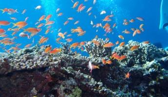 きっと誰もが魅了される海底の神秘!最近海に潜ったので、ダイビングの写真を晒していく