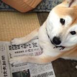 『新聞を読む柴犬』の画像