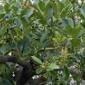 野鳥が集う樹