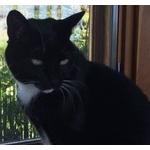 【白黒付かない画像あり】2年間飼った猫が行方不明。別な人が見つけ5年間飼う。さぁ飼い主はどちら?
