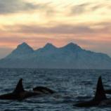 『ロシアで発覚したクジラの刑務所』の画像