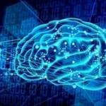 アメリカの実験室で培養の「ミニ脳」に神経活動現るwwwwwwww