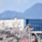 鳥撮りいっぽのブログ