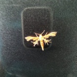 『紋章みたいな蛾』の画像