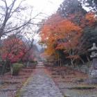 『【再編集】2018/11/26(月) 祈りながら、英彦山歩き』の画像