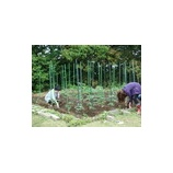 『植物病原菌を抑制するのは植物ではなく土壌の微生物』の画像