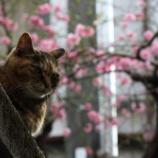 『桜と猫・・新宿』の画像