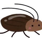 【襲撃】ゴキブリさん達、続々と冬眠から目を覚まし始めるwwwwww