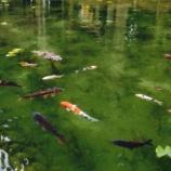 『1月の絶景対決!「早咲き菜の花畑(滋賀県守山市)」 VS 「モネの池(岐阜県関市)」どちらも綺麗ですね。』の画像