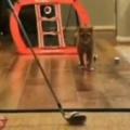 【ネコ】 お姉さんが部屋の中で「ゴルフ」の練習をする。…パシッ! → 猫の達人はこうします…
