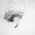 『洞窟猫』の画像