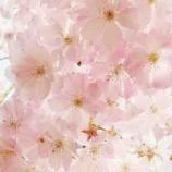 『桃色(ピンク)を 数で表す としたら?』の画像