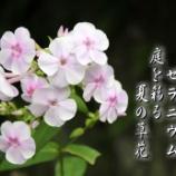 『天竺の香り』の画像