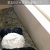【速報】SKE48の中学生メンバーが掟破りのお風呂配信開始www