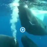 『水の中のクジラたち♡』の画像