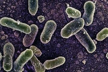 【病原菌】 WHO 最も危険な細菌を公表 薬剤耐性の12種類 抗生物質が効かず世界的に大きな問題に