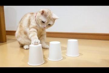 猫とシャッフルゲーム!中にはおやつが…