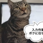 猫の額ほどの徒然日記