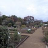 『11月の都立薬用植物園Ⅱ;小平市』の画像