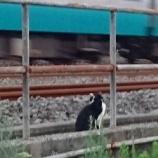 『鉄道オタクの』の画像