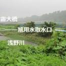 金沢市の用水訪ねまくり まず旭用水から (2)       白山神駈道の風露草