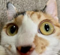 三毛猫からの不可解な暗号を解き明かした結果…