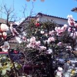 『春うらら』の画像