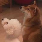 『🐕滑らない愛犬生活🐩』の画像