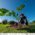 絶滅を防げるか?世界で一番孤独な木「カイコマコ」の物語 ニュージーランド