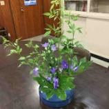 『今週の生け花』の画像