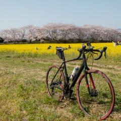 春のサイクリング【2018】
