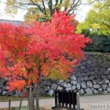 『金沢で香箱蟹を食べる旅:金沢城へ行く!』の画像