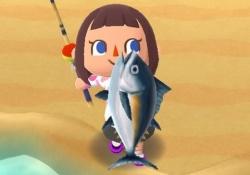 【ポケ森:参考】虫/魚のレア出現率+捕獲率まとめ!マグロ低すぎるwww