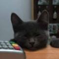 【子ネコ】 私は薬局屋で働いている。今日はどうしましたか? → 珍しいお客さんがやってきました…