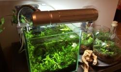 水草水槽に濾過フィルターって必要なの?