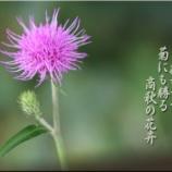 『商秋の花卉』の画像